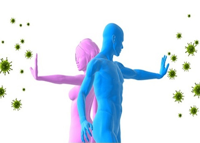 Nhân sâm giúp tăng cường hệ miễn dịch - Giải đáp nhân sâm có tác dụng gì